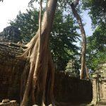 カンボジアに行ってきた -その1-